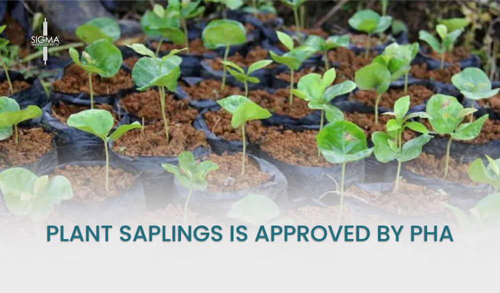 Plant Saplings Is Approved By PHA